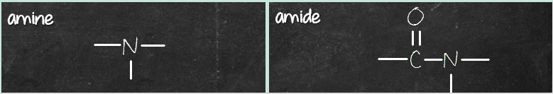 amine amide difference